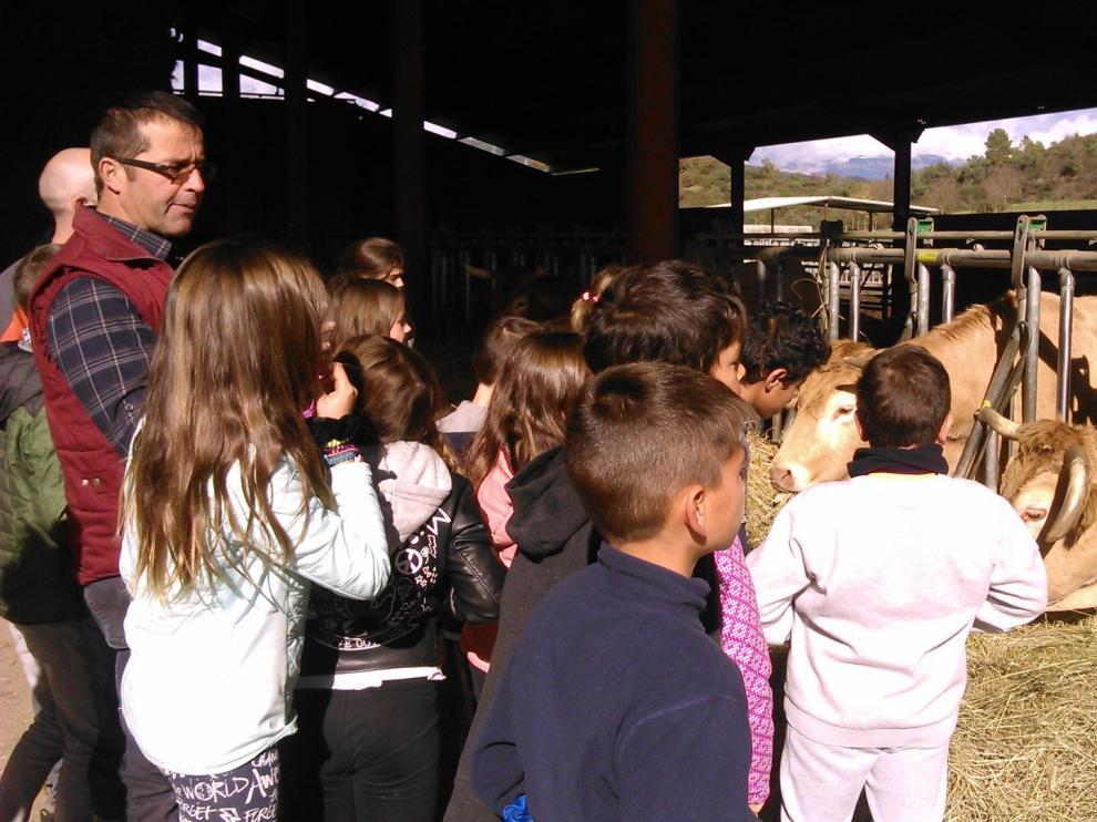 Los alumnos de quinto curso han conocido de cerca la raza de ternera pirenaica.
