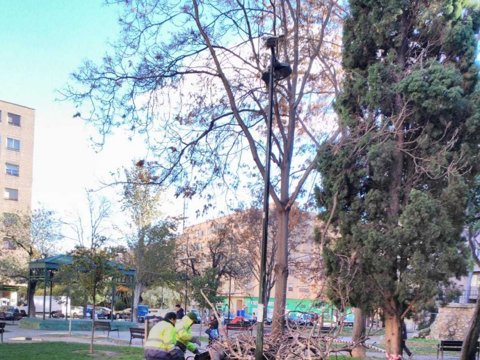 El árbol caído en la plaza de Reina Sofía.