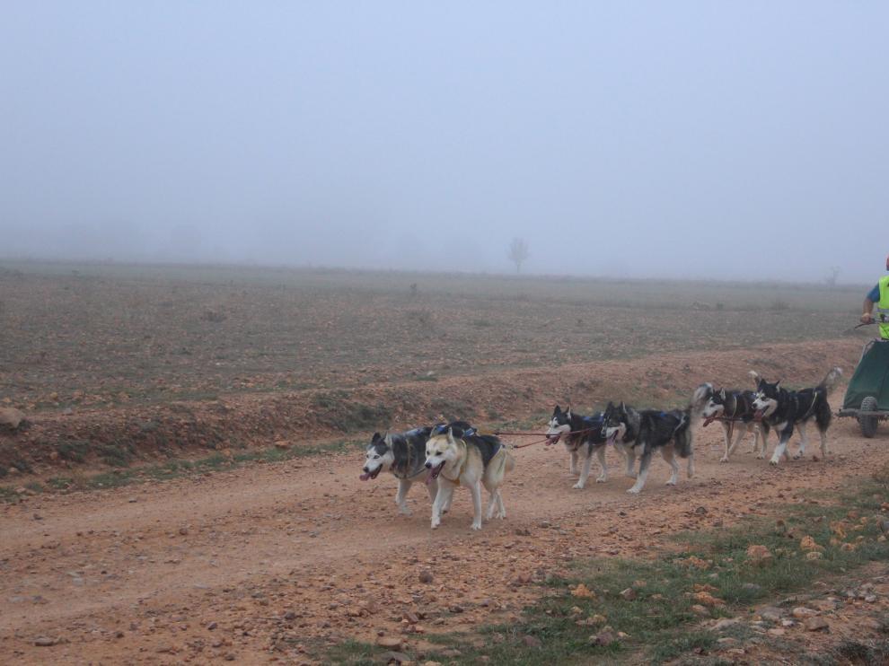 Un musher guía a sus perros, en una etapa de la pasada edición