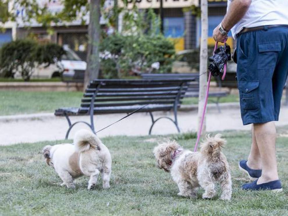 Perros en un parque