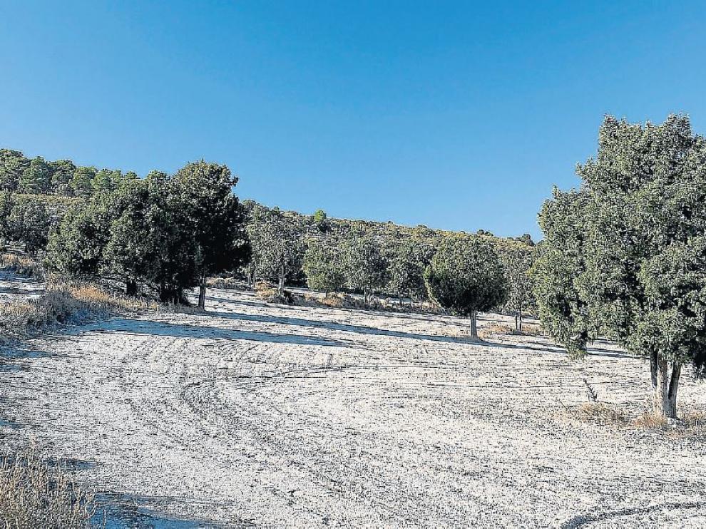 Sabinar de la Retuerta de Pina de Ebro.