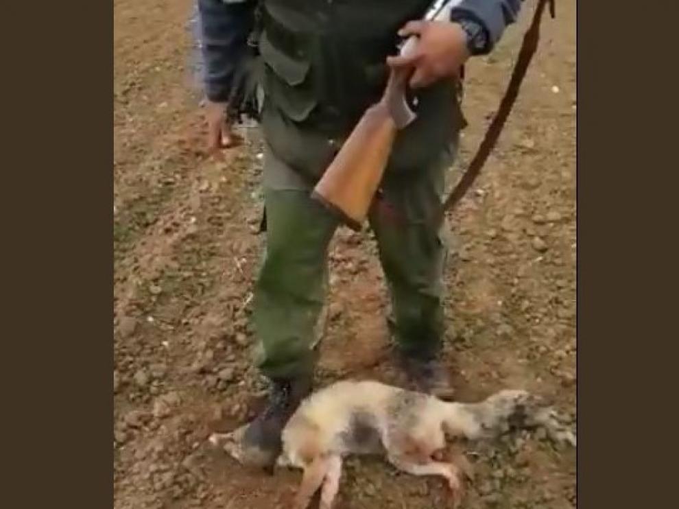 Imputado un vecino de Huesca por la tortura a un zorro mostrada en un vídeo