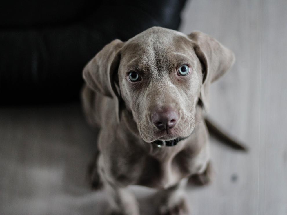 ¿Quién ha de quedarse con la mascota en caso de ruptura?