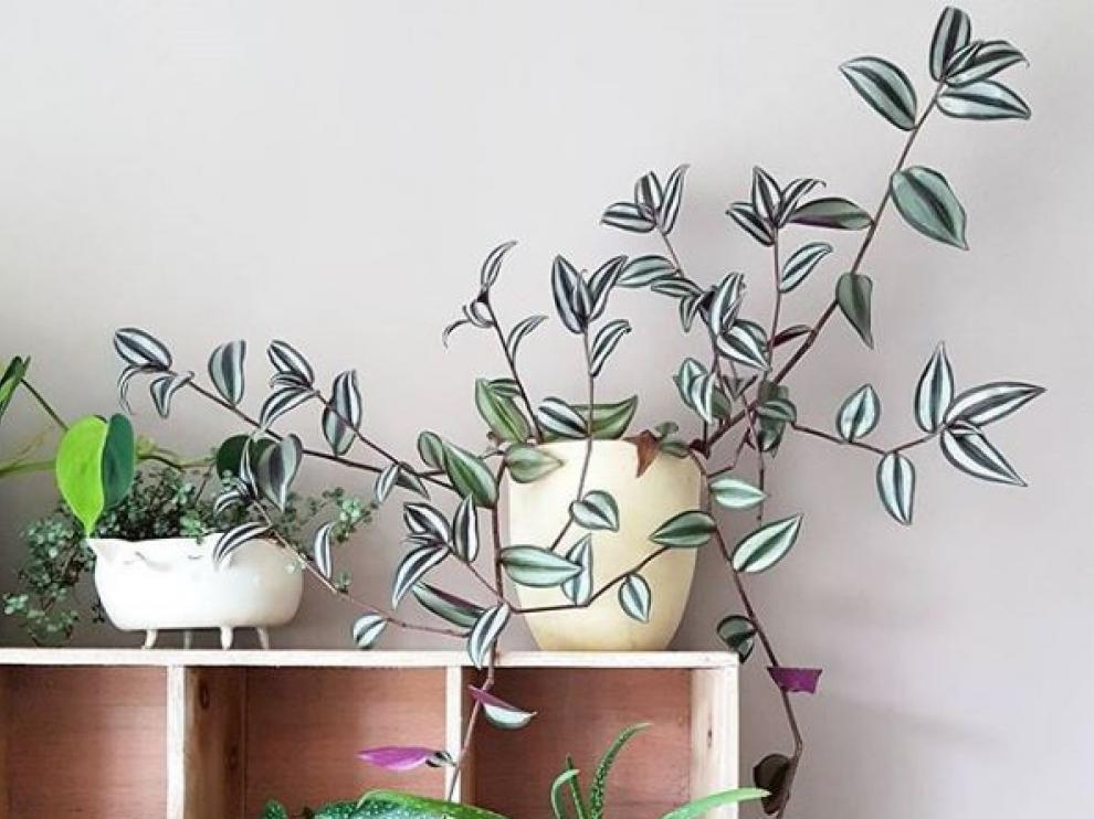 Plantas en el hogar: un elemento decorativo