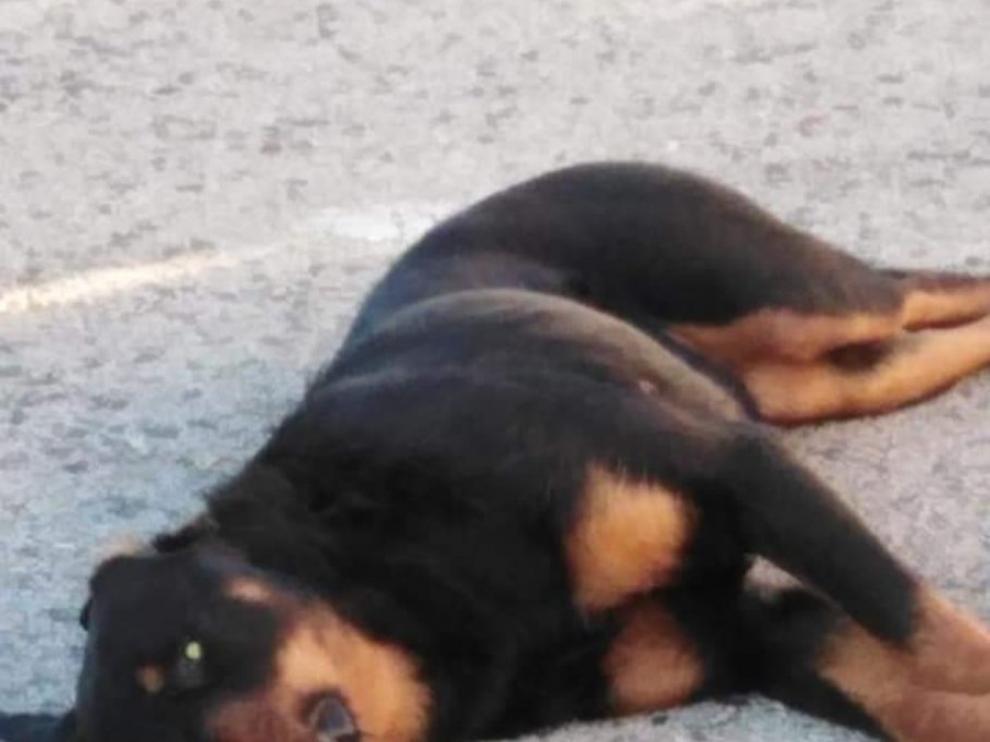 Un policía local de Calafell mata de un tiro a perro que le atacaba.