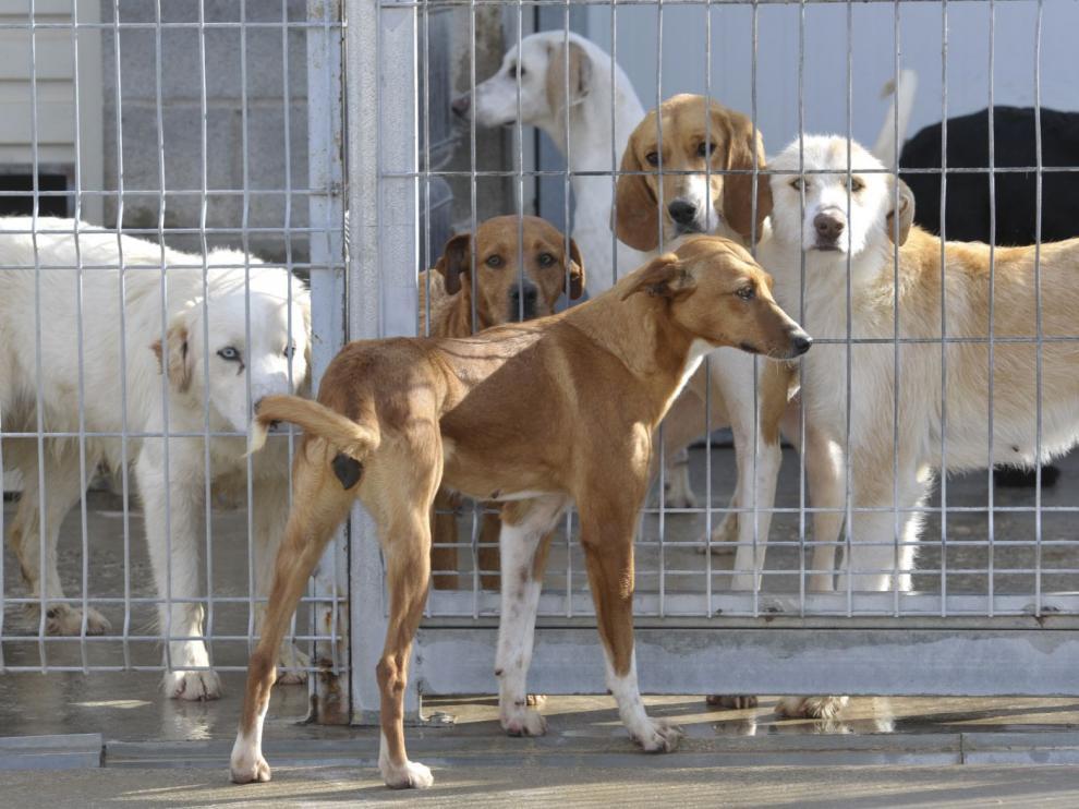 Los animales se entregan con una cartilla sanitaria