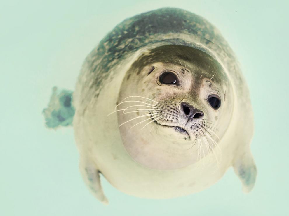 Wikipedia celebra el mes de la Antártida con una 'editatón' en la que puedes participar