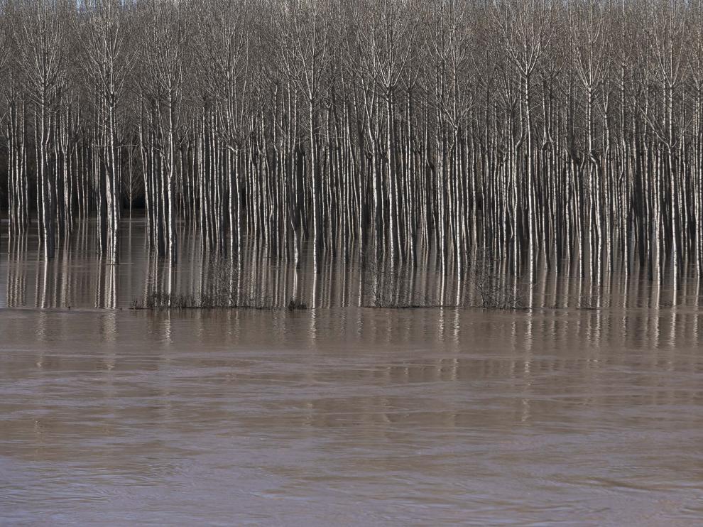 Crecida del Ebro en la Ribera Alta este sábado.