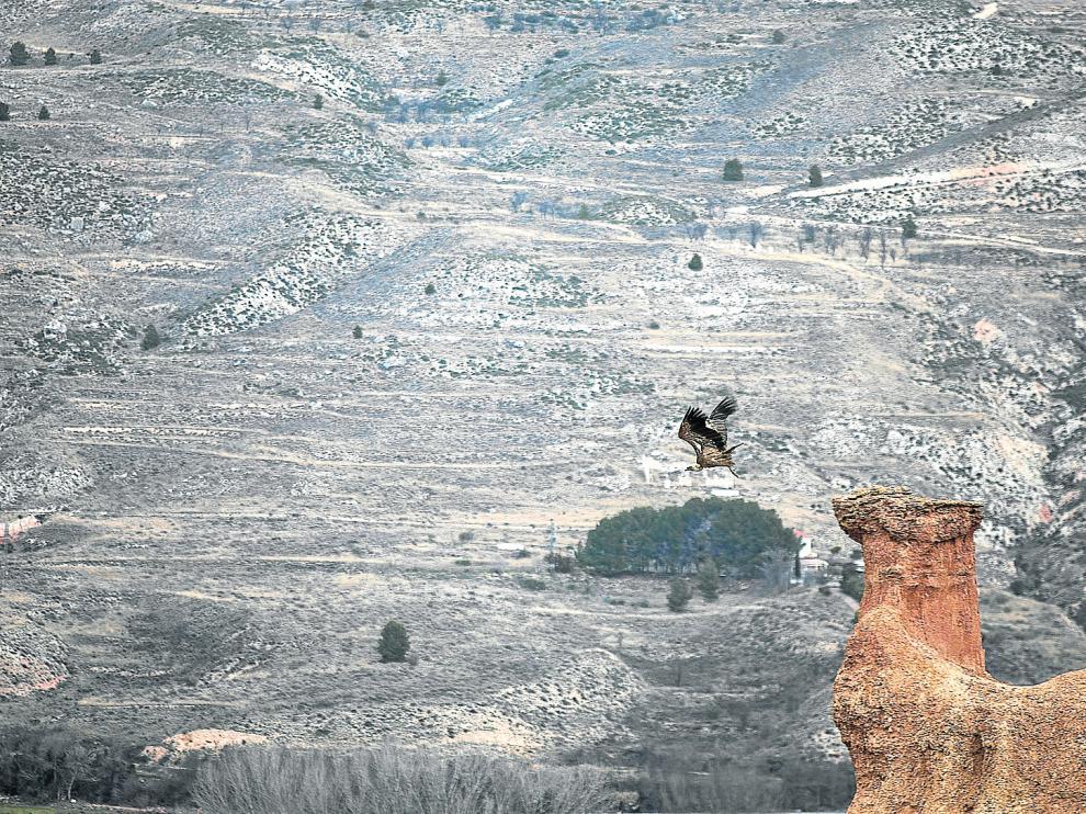 Un buitre levanta el vuelo desde la cabeza del 'camello', la figura más famosa de las Cárcavas de Morata de Jiloca.