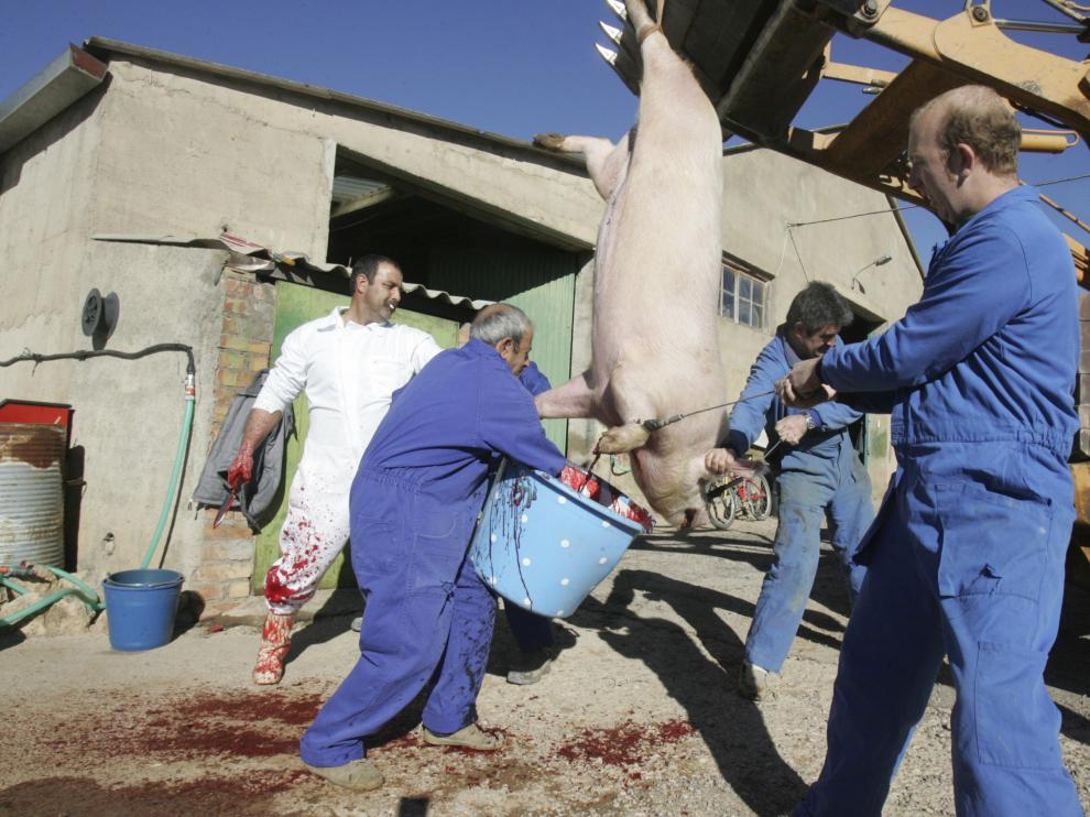 Una matacía particular en Bolea, en la que ya no se hace en público la muerte del cerdo.