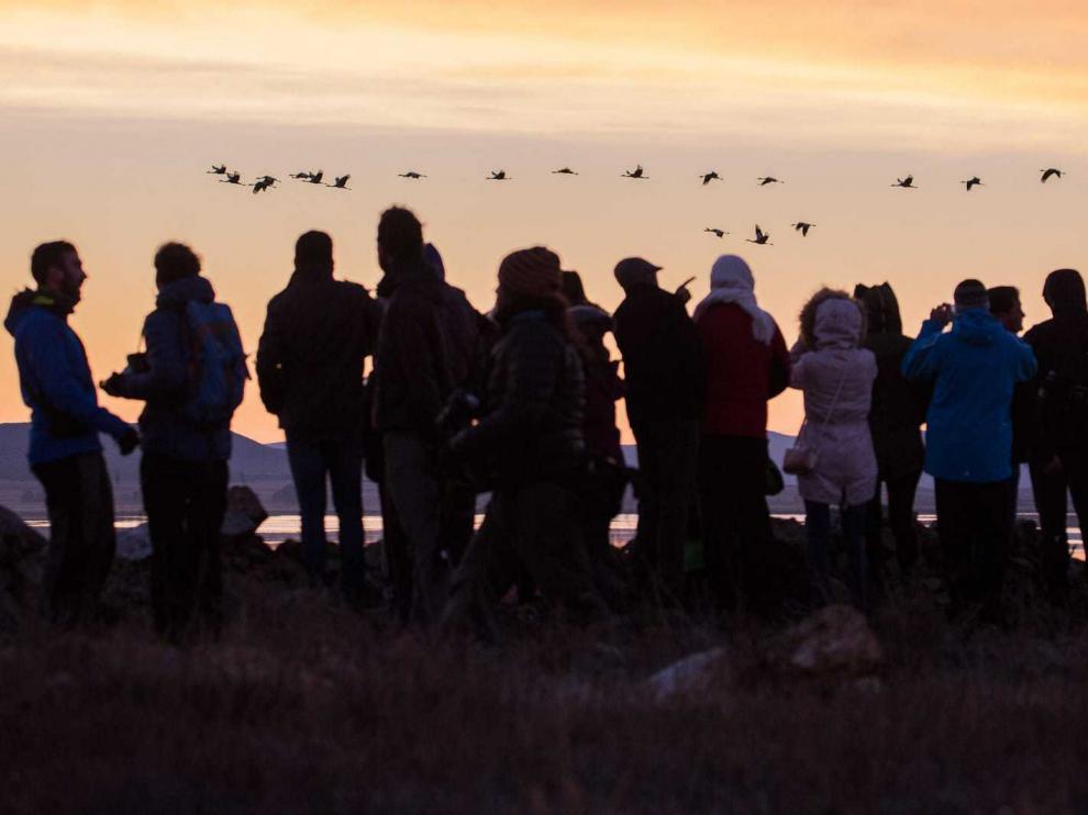 Numerosas personas observan a las grullas en la laguna de Gallocanta.
