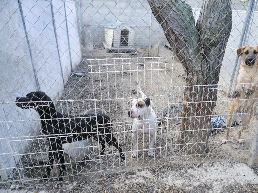 Imagen de varias jaulas exteriores en la perrera de Peñaflor.
