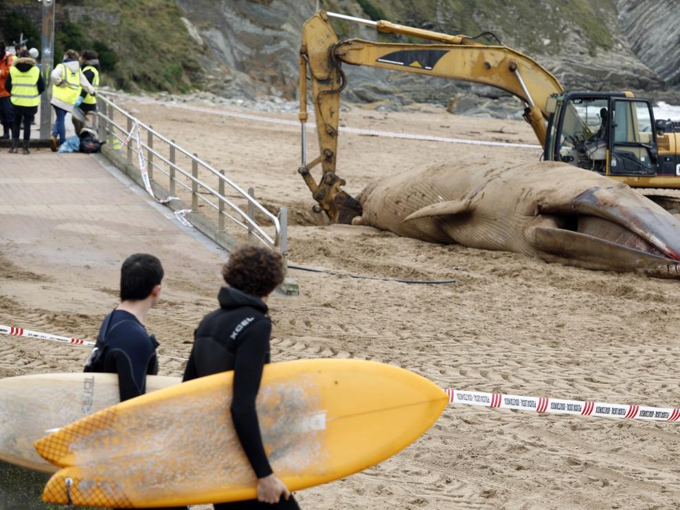 """Los trabajos para sacar el animal de la playa han sido """"costosos""""."""