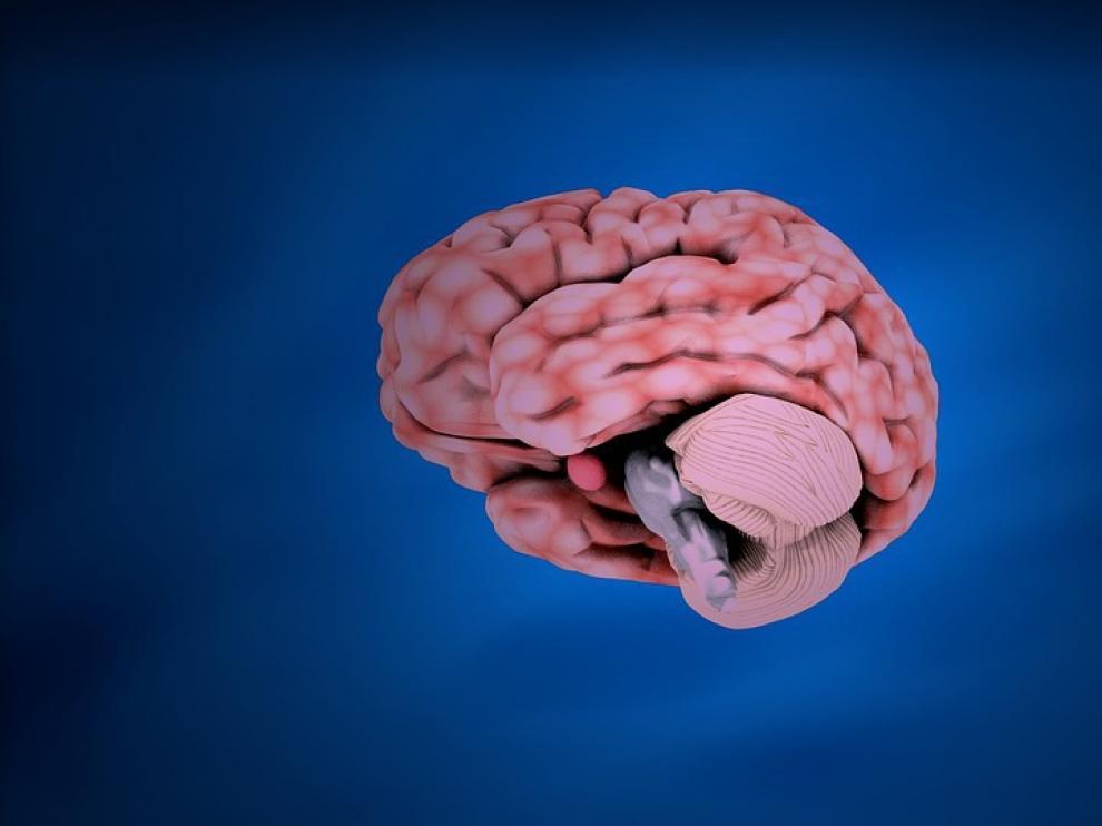 Un estudio apunta que las mujeres tienden a permanecer mentalmente agudas durante más tiempo que los hombres