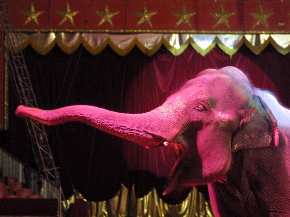 Un elefante de un circo instalado en Zaragoza, en una imagen de archivo.