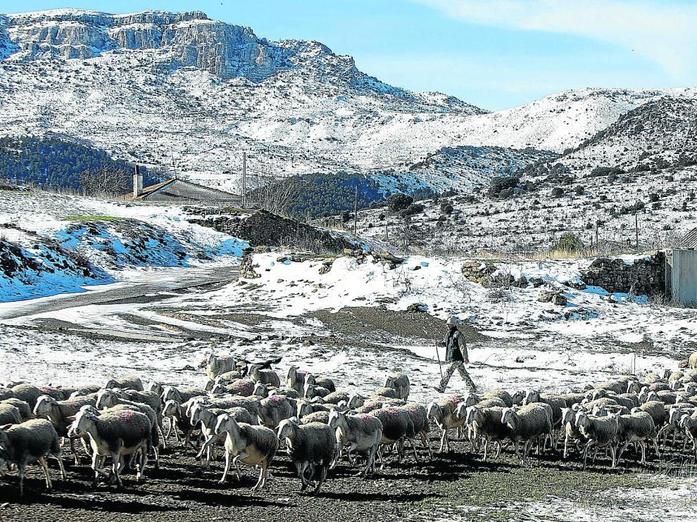 José Ramón San Miguel vigila el rebaño de ovejas de su familia. A su derecha, el pueblo de Bádenas.