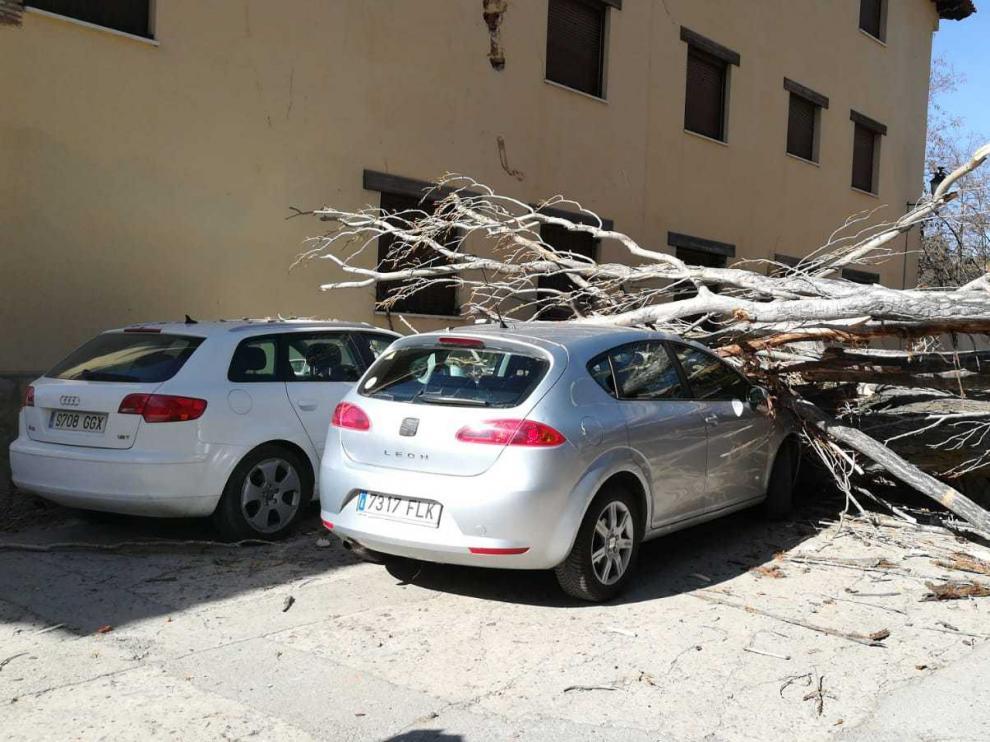 El árbol se ha desplomado sobre dos coches aparcados en Rubielos.