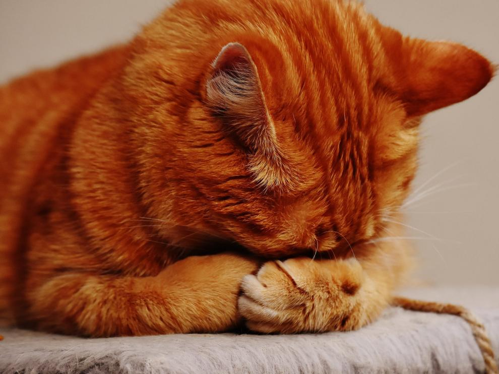 Memes para celebrar el Día Internacional del Gato