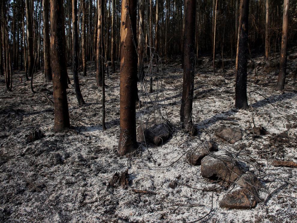 Un monte quemado tras un incendio en Ramales (Cantabria).