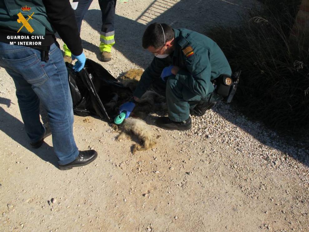 Hallan 5 perros muertos y 7 en pésimo estado en un criadero ilegal, en El Burgo de Ebro