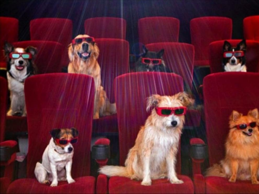 Un cine en Brasil abre sus puertas a 180 perros para un preestreno.