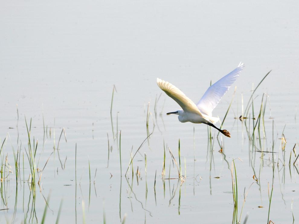 El mes de marzo es uno de los mejores para observar aves en la laguna de Sariñena.