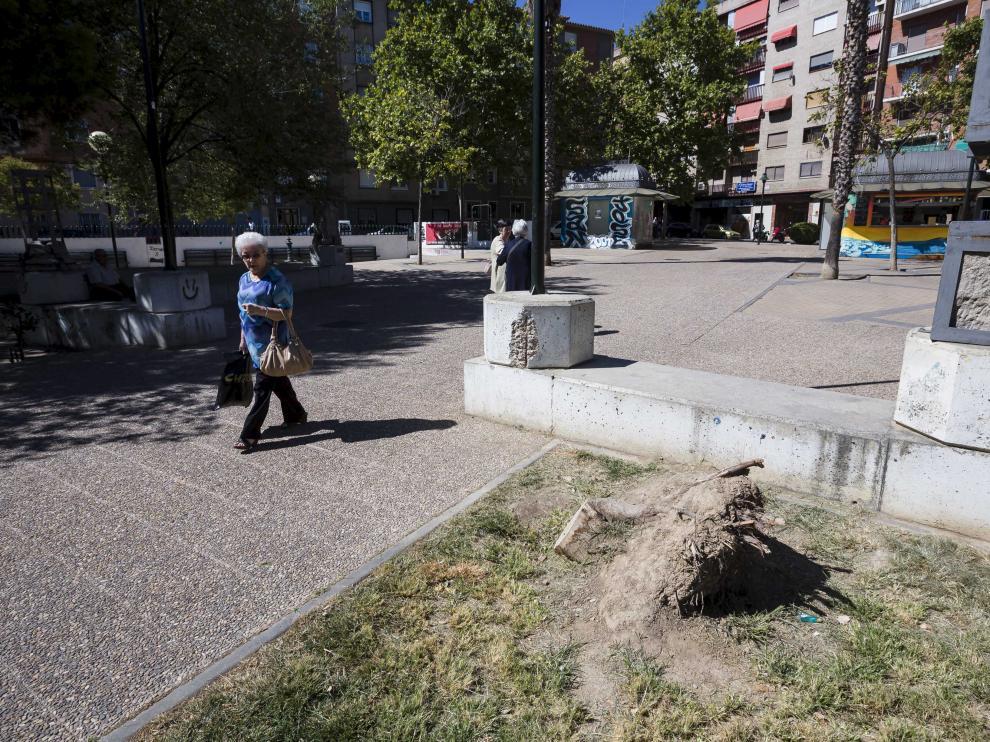 En la plaza Mayor de San José hay numerosos tocones de árboles talados.
