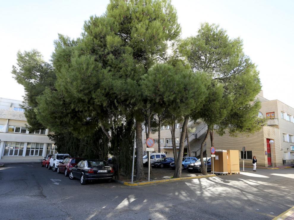 Zona de pinos junto al hospital San Jorge de Huesca donde se prevé construir el nuevo edificio de Urgencias.