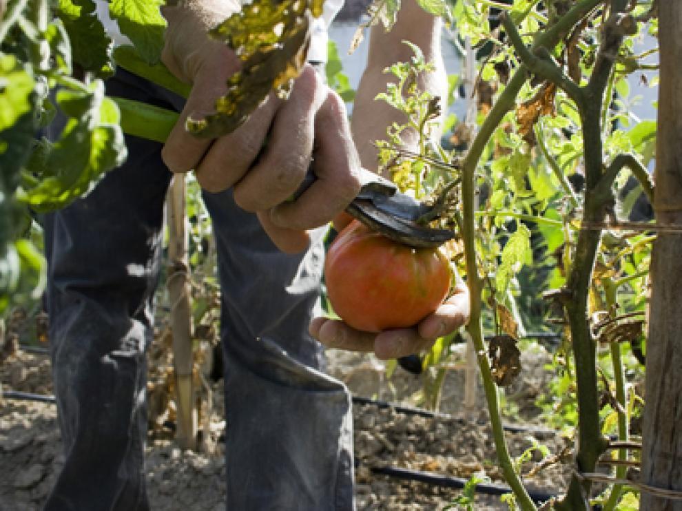 Huerta ecológica en Movera.