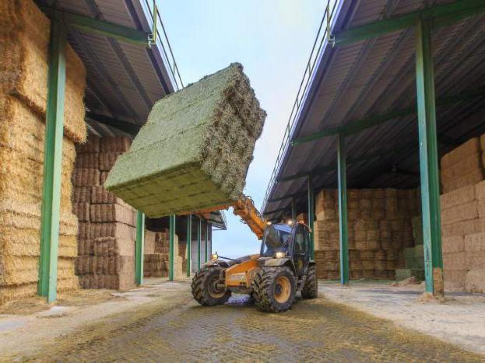 Una cooperativa aragonesa dedicada a la producción de alfalfa deshidratada