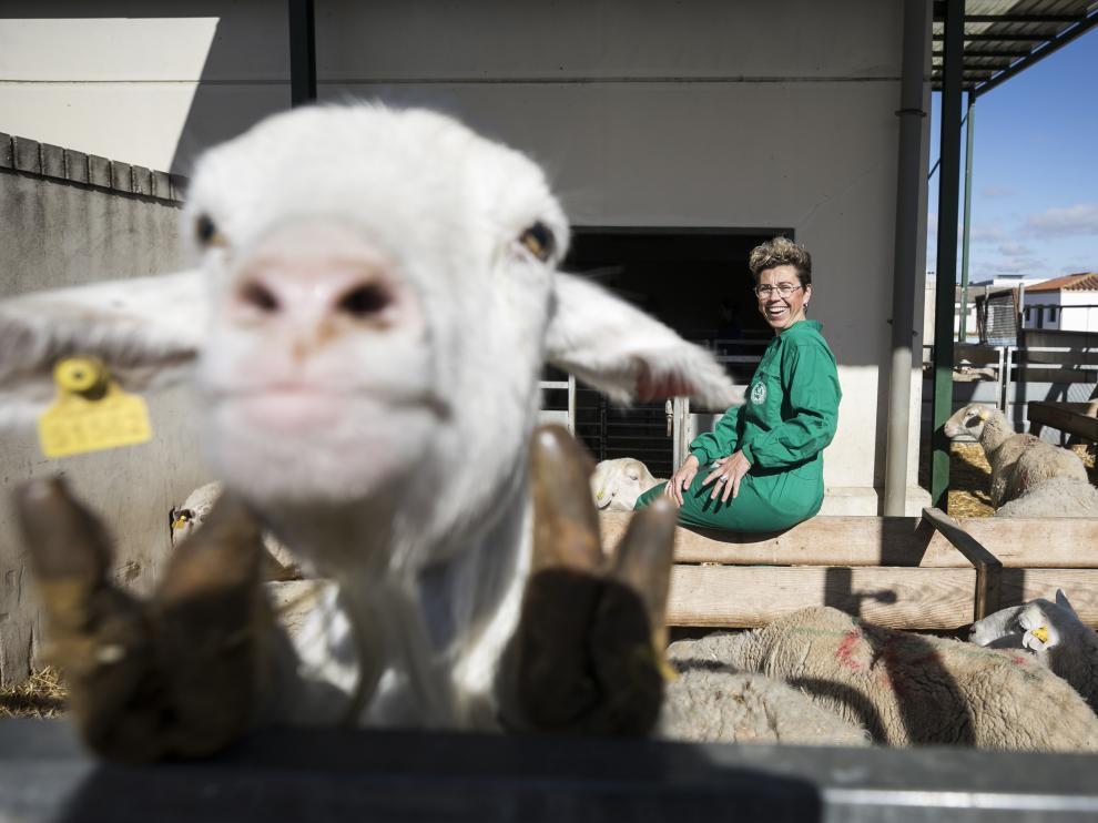 MARIAN RAMO ( VETERINARIA ) / DIRECTORA DE PATOLOGIA ANIMAL DE LA FACULTAD DE VETERINARIA ( ZARAGOZA ) / 13/03/2019 / FOTO : OLIVER DUCH [[[FOTOGRAFOS]]]