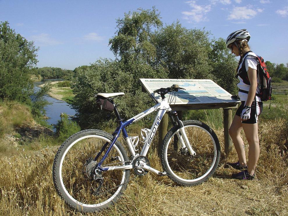 La bicicleta de montaña es un buen medio para conocer los sotos y galachos del Ebro.