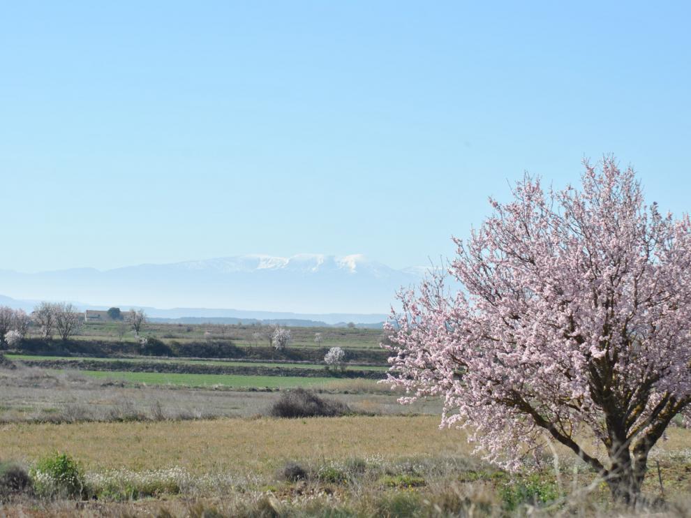 El Moncayo aparece al fondo de esta imagen tomada esta semana en la carretera de Sádaba a Pinsoro.