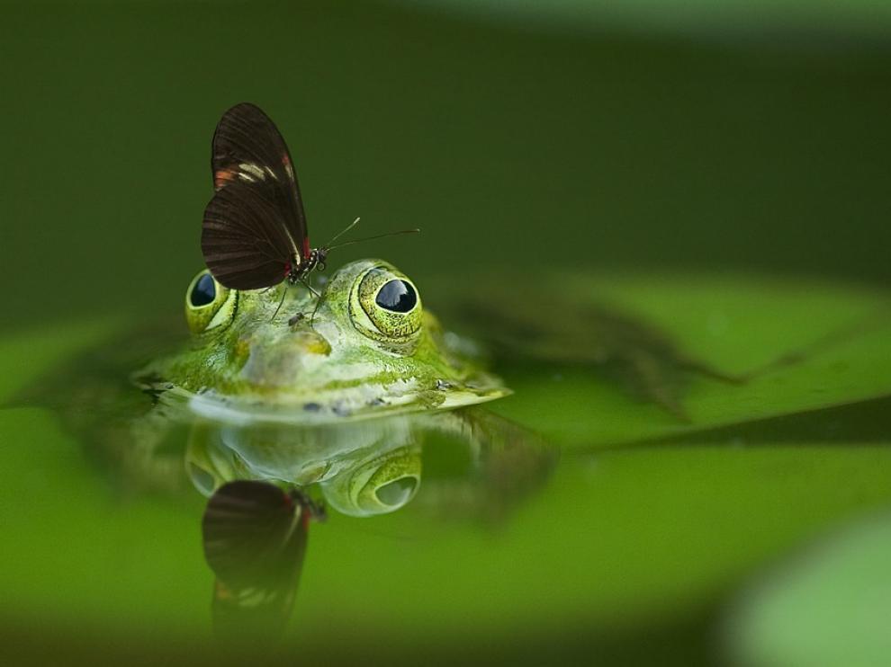 Foto de archivo de una rana.
