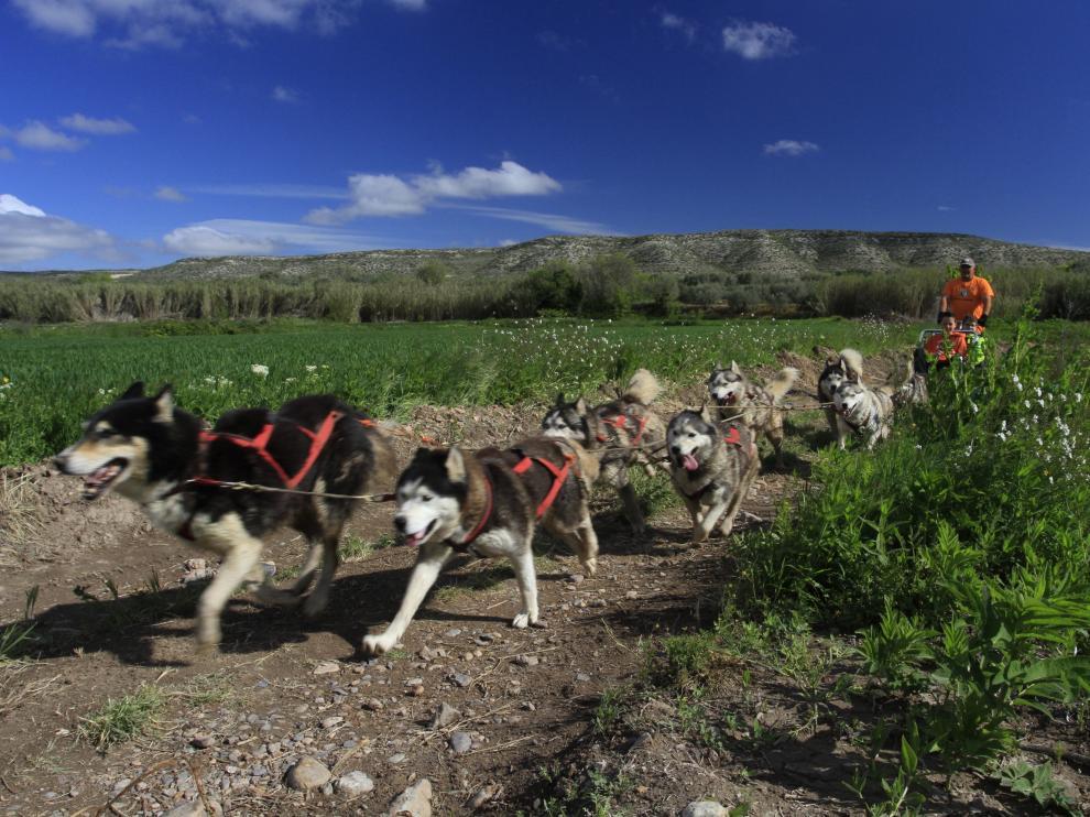 Mushing entre viñedos une el contacto con la naturaleza y el mundo del vino.