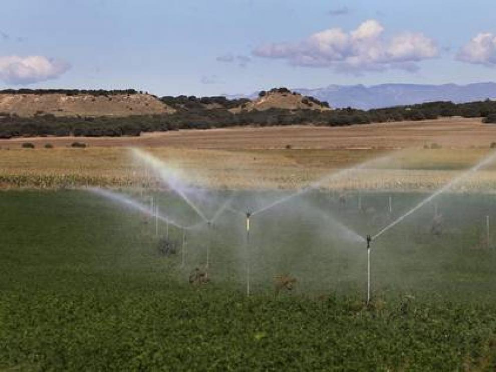 El riego por aspersión gana adeptos en Aragón