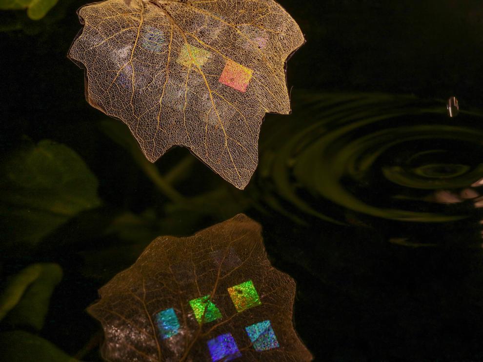 'Trampa de luz', imagen premiada en la modalidad General del certamen Fotciencia. Cristiano Matricardi