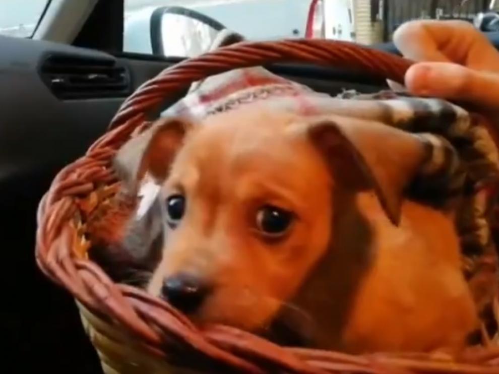 El cachorro fue recogido ayer en la calle Borja del barrio zaragozano de Las Delicias