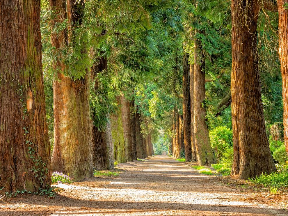 Solo 20 minutos de contacto con la naturaleza disminuyen los niveles de hormonas del estrés.
