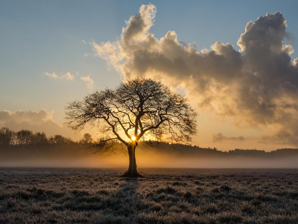 Deseo, fruto del gran árbol