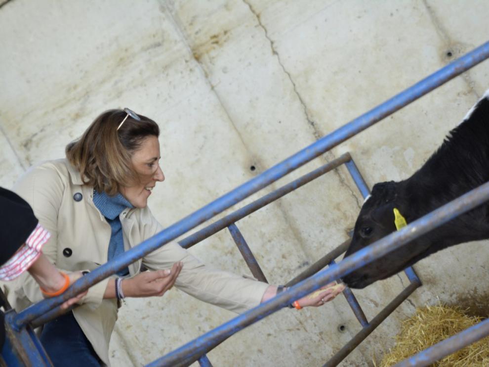 Lourdes Guillén da de comer a un ternero en una granja de Vencillón.