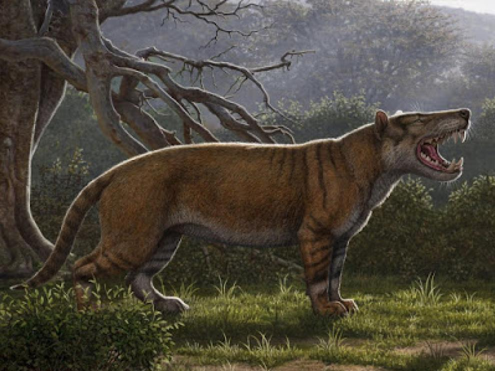 Nuevo mamífero carnívoro