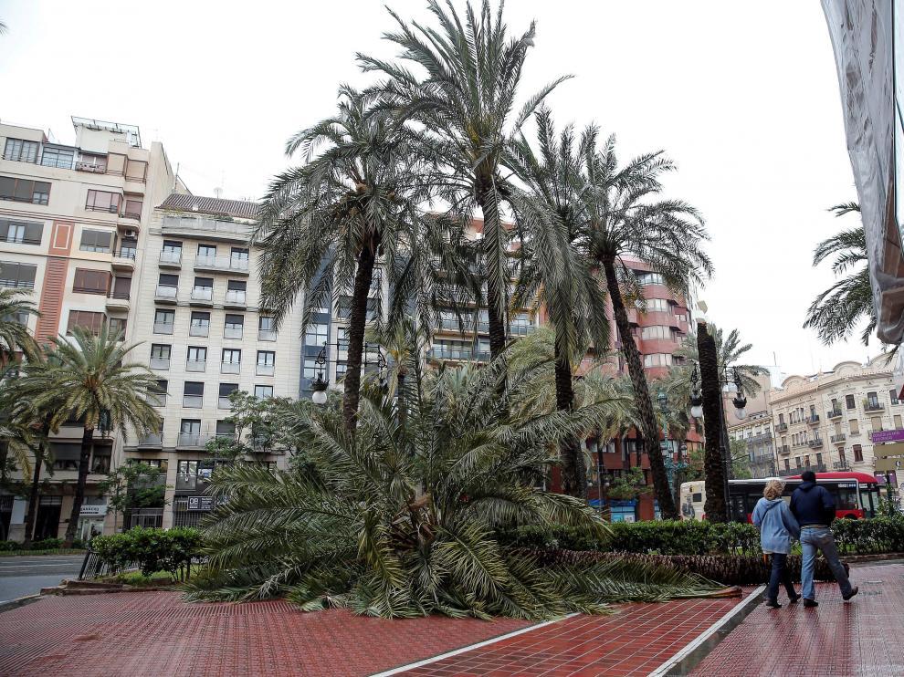 Palmeras derribadas por el viento en Valencia