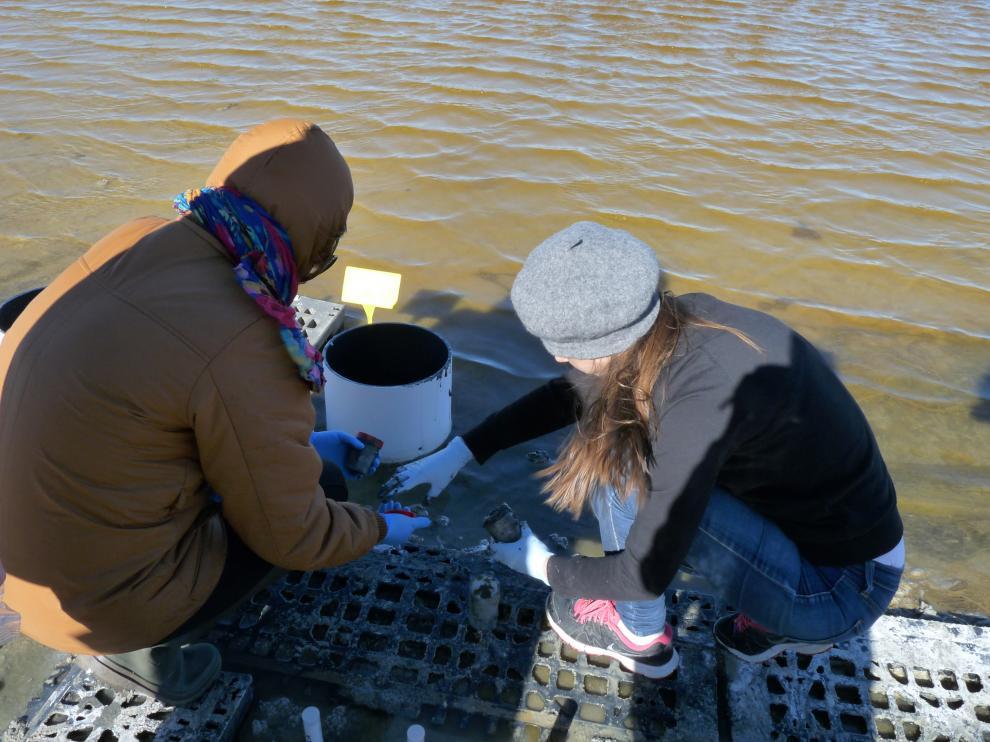 Investigadores recogen muestras de la salina de Bujaraloz (Zaragoza).