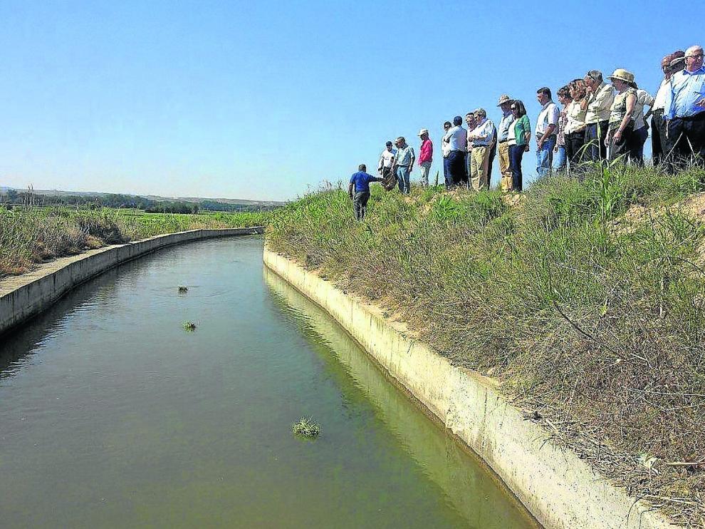 Un grupo de personas observa el recorrido que realizan los fajos de hierba camino del partidero de Almisén.