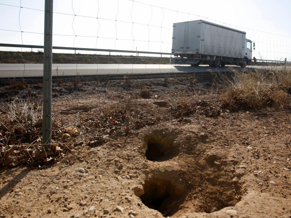 Imagen de archivo de una plaga de conejos en Calatorao.