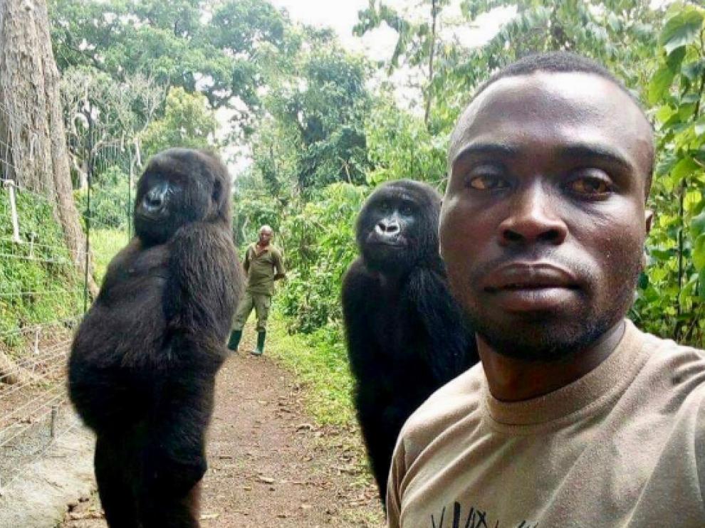 La imagen de los cuidadores con las gorilas que ha sido compartida en las redes sociales.