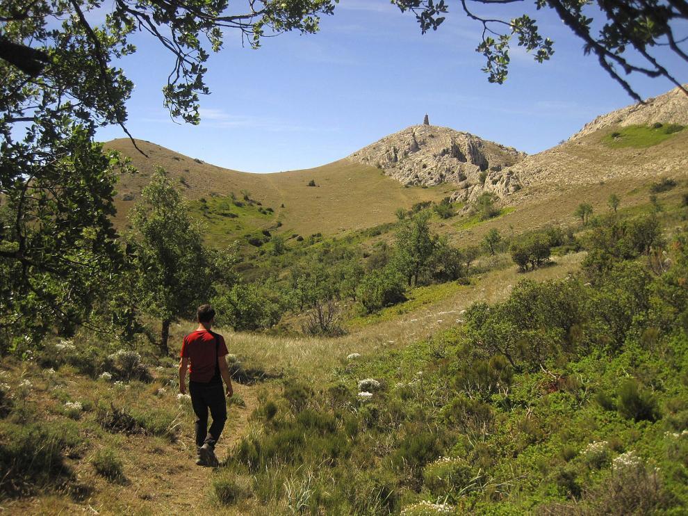 Quejigar antes de abandonar la zona con vegetación, camino de la cima de la peña Palomera.