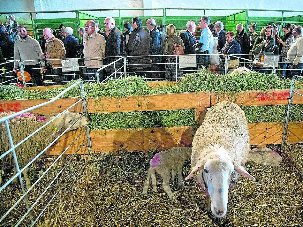 La feria Valga abrió ayer sus puertas con una variada oferta agrícola, comercial y ganadera.