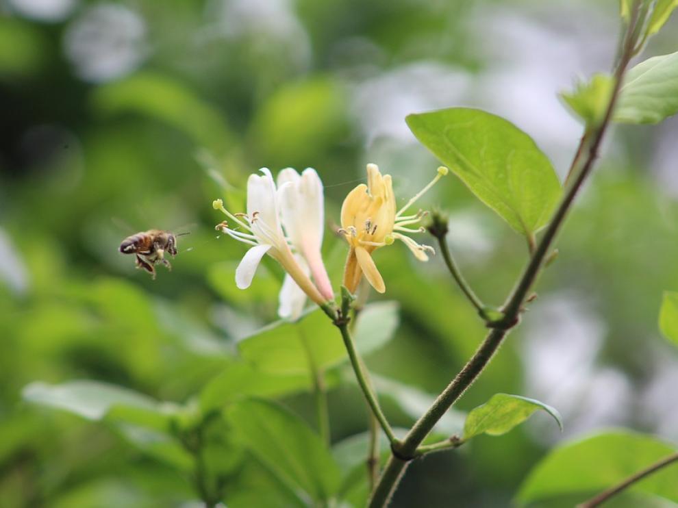 Las abejas son unos de los protagonistas de la biodiversidad